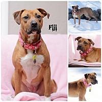 Adopt A Pet :: Fiji - Sioux Falls, SD