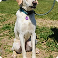 Adopt A Pet :: Miles - Berkeley Heights, NJ