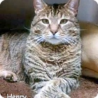 Adopt A Pet :: HENRY - Cliffside Park, NJ