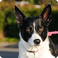 Adopt A Pet :: Hannah - Agoura Hills, CA
