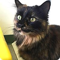 Adopt A Pet :: Stormy - Colorado Springs, CO