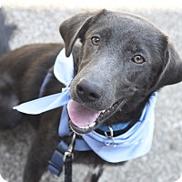 Adopt A Pet :: Hannah - Marietta, GA