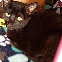 Adopt A Pet :: Misty - Randolph, NJ