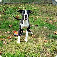 Adopt A Pet :: Pilgrim - Fairmont, WV