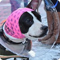 Adopt A Pet :: Sanza Babushka - Westerly, RI