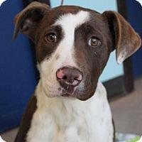 Adopt A Pet :: QUINN - Red Bluff, CA