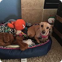 Adopt A Pet :: Daisy 1 - Las Vegas, NV