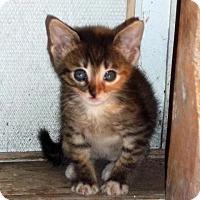 Adopt A Pet :: Nixie 20 - Austin, TX
