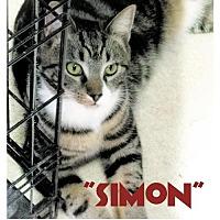 Adopt A Pet :: Simon - Seaford, DE