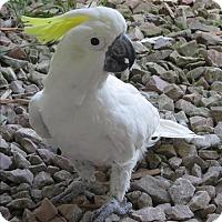 Adopt A Pet :: Franklin - Elizabeth, CO