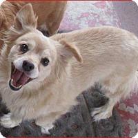 Adopt A Pet :: Crystal - Tijeras, NM