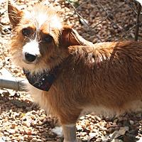 Adopt A Pet :: Wendy - Norwalk, CT