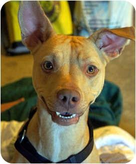 Terrier (Unknown Type, Medium) Mix Dog for adoption in Xenia, Ohio - Sasha