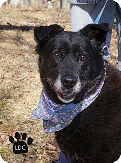 Labrador Retriever Mix Dog for adoption in Huntsville, Alabama - Midnight