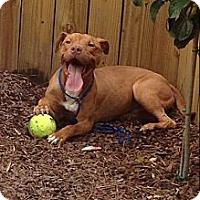 Adopt A Pet :: Kurt - Birmingham, AL