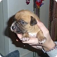 Adopt A Pet :: Bandit - Framingham, MA