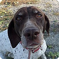 Adopt A Pet :: Winnie - Chewelah, WA