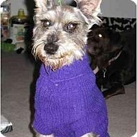 Adopt A Pet :: Grommit - Los Alamitos, CA