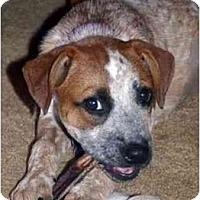 Adopt A Pet :: Joon - Phoenix, AZ