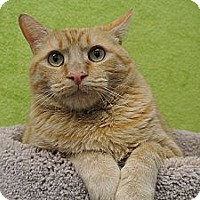 Adopt A Pet :: Mo - Foothill Ranch, CA
