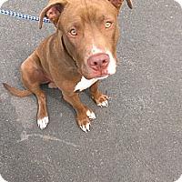 Adopt A Pet :: Mason - Berlin, CT