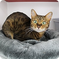 Adopt A Pet :: Juliette - Newport Beach, CA