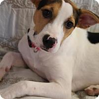 Adopt A Pet :: Kylie - Homewood, AL