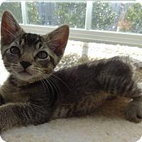 Adopt A Pet :: Finley - Colmar, PA