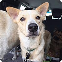 Adopt A Pet :: Brooklynn *courtesy listing - Los Angeles, CA