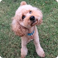 Adopt A Pet :: Bennett - Buena Park, CA
