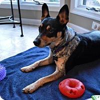 Adopt A Pet :: Pepper D-66062 - Westampton, NJ