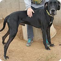 Adopt A Pet :: Oiler - Phoenix, AZ