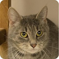 Adopt A Pet :: Sasuke - Ithaca, NY
