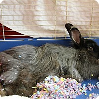 Adopt A Pet :: Kismet - Elyria, OH