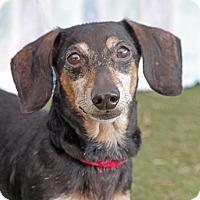 Adopt A Pet :: Mickey - Umatilla, FL