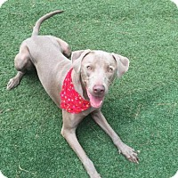 Adopt A Pet :: Ace - Atlanta, GA