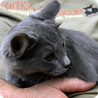 Adopt A Pet :: Bluz - Richmond, VA