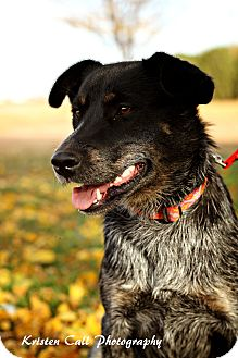 Australian Cattle Dog Mix Dog for adoption in Allen, Texas - Sansa