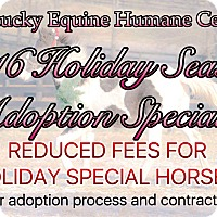Adopt A Pet :: Holiday Special - Nicholasville, KY