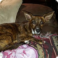 Adopt A Pet :: Gidget - Seahurst, WA
