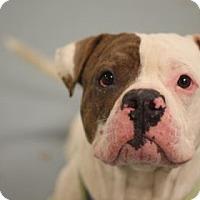 Adopt A Pet :: Behbo - Philadelphia, PA
