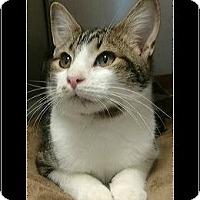 Adopt A Pet :: Timmy - Waldorf, MD