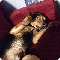 Adopt A Pet :: Abbott - Rochester, MN