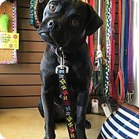 Adopt A Pet :: BEKKI - Inland Empire, CA