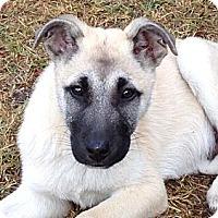 Adopt A Pet :: ERNIE - Torrance, CA