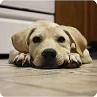 Adopt A Pet :: Jessie - Arlington, TX