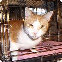 Adopt A Pet :: Bert - East Brunswick, NJ