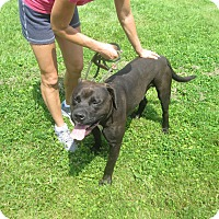 Adopt A Pet :: #331-14  ADOPTED! - Zanesville, OH