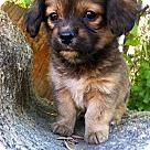 Adopt A Pet :: Grenda pup