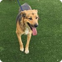Adopt A Pet :: Autumn - Las Vegas, NV